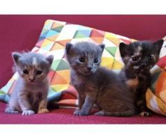 Cuccioli di gattino appena nato